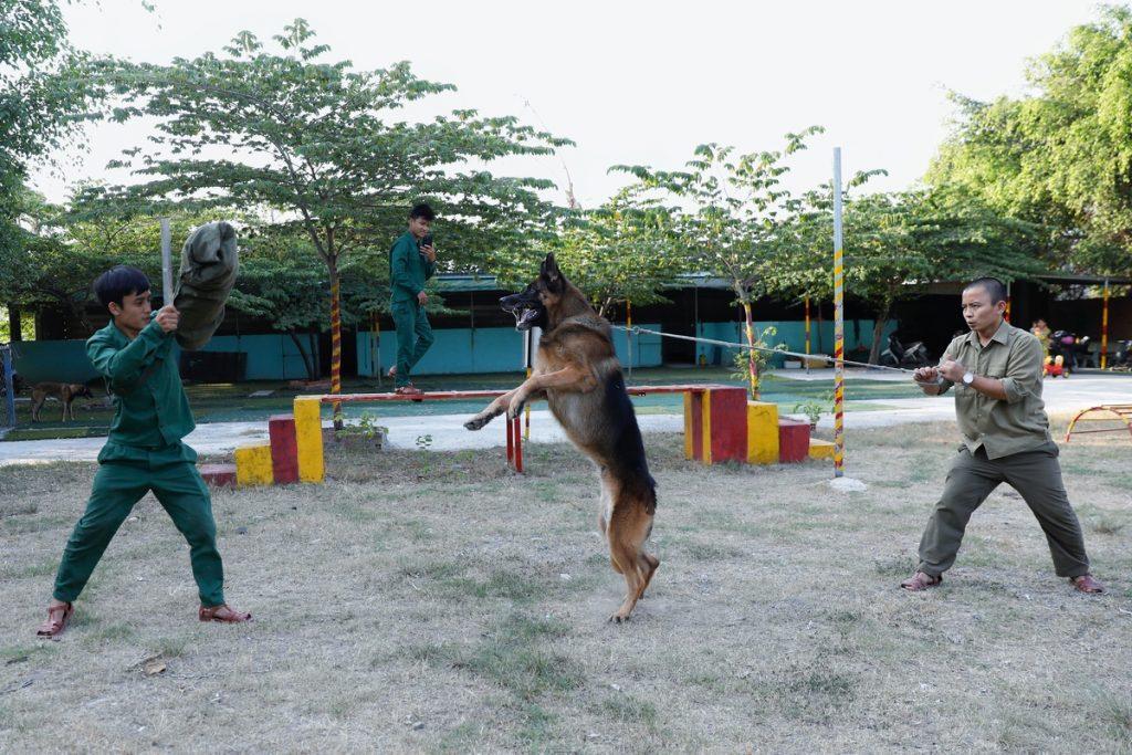 Những giống chó nghiệp vụ được săn đón nhiều nhất