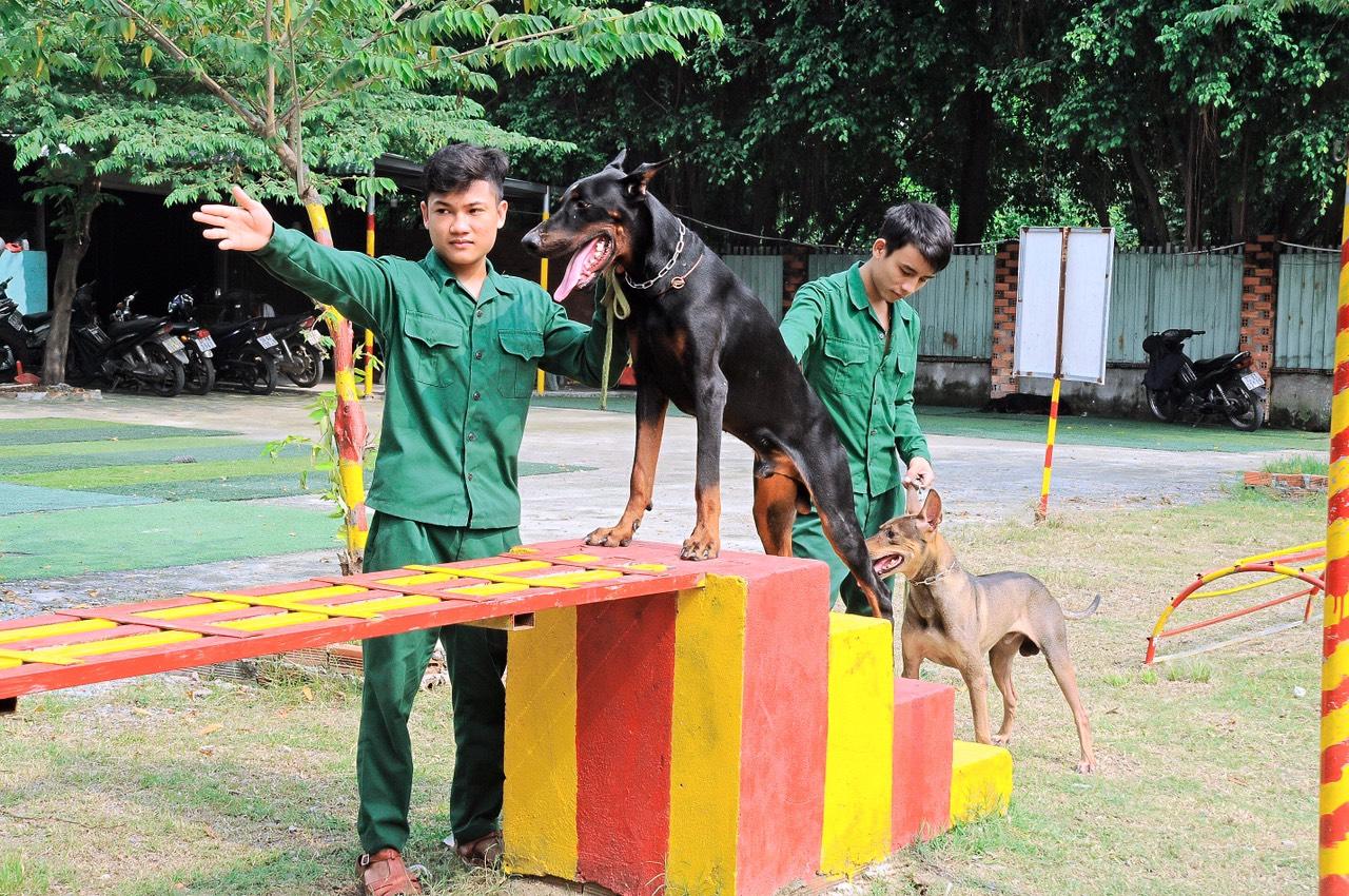 hình ảnh huẩn luyện chó tầm cao